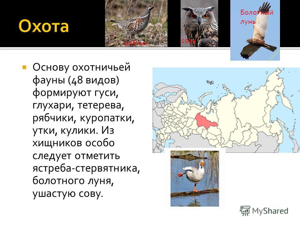 Основу охотничьей фауны (48 видов) формируют гуси, глухари, тетерева, рябчики, куропатки, утки, кулики. Из хищников особо следует отметить ястреба-стервятника, болотного луня, ушастую сову. рябчик сова Болотный лунь