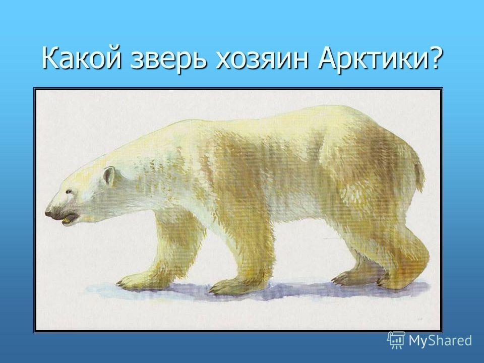 Какой зверь хозяин Арктики?