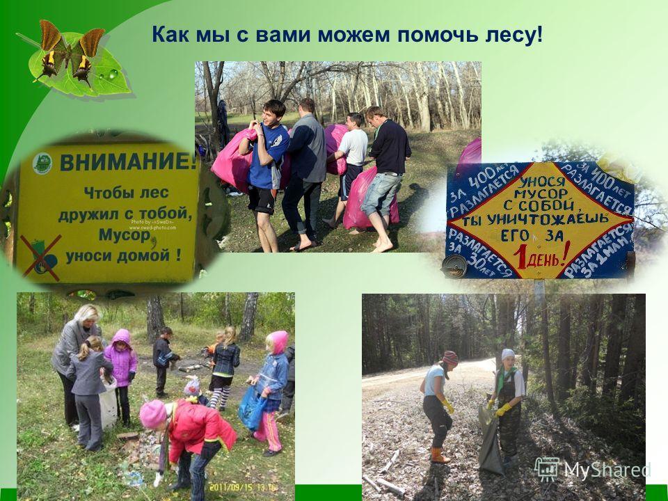 Как мы с вами можем помочь лесу!