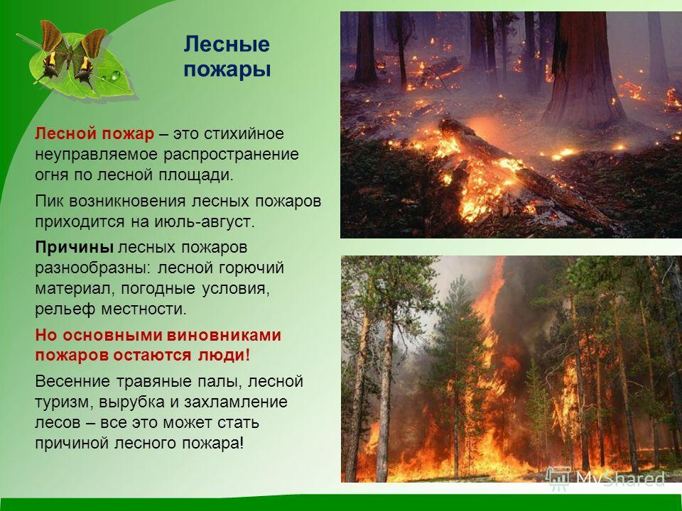 Лесные пожары Лесной пожар – это стихийное неуправляемое распространение огня по лесной площади. Пик возникновения лесных пожаров приходится на июль-август. Причины лесных пожаров разнообразны: лесной горючий материал, погодные условия, рельеф местно
