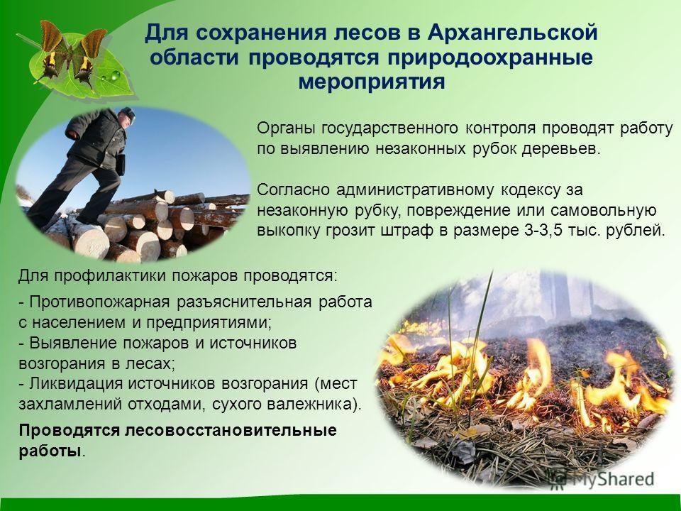 Для сохранения лесов в Архангельской области проводятся природоохранные мероприятия Органы государственного контроля проводят работу по выявлению незаконных рубок деревьев. Согласно административному кодексу за незаконную рубку, повреждение или самов