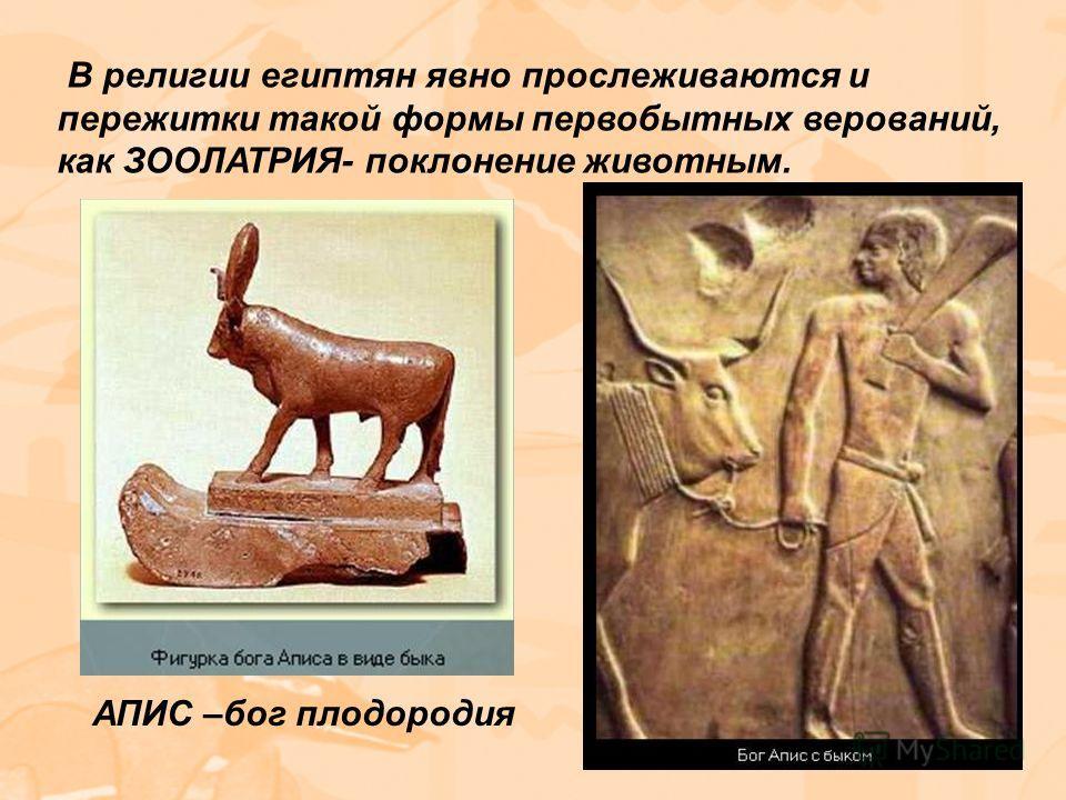 В религии египтян явно прослеживаются и пережитки такой формы первобытных верований, как ЗООЛАТРИЯ- поклонение животным. АПИС –бог плодородия