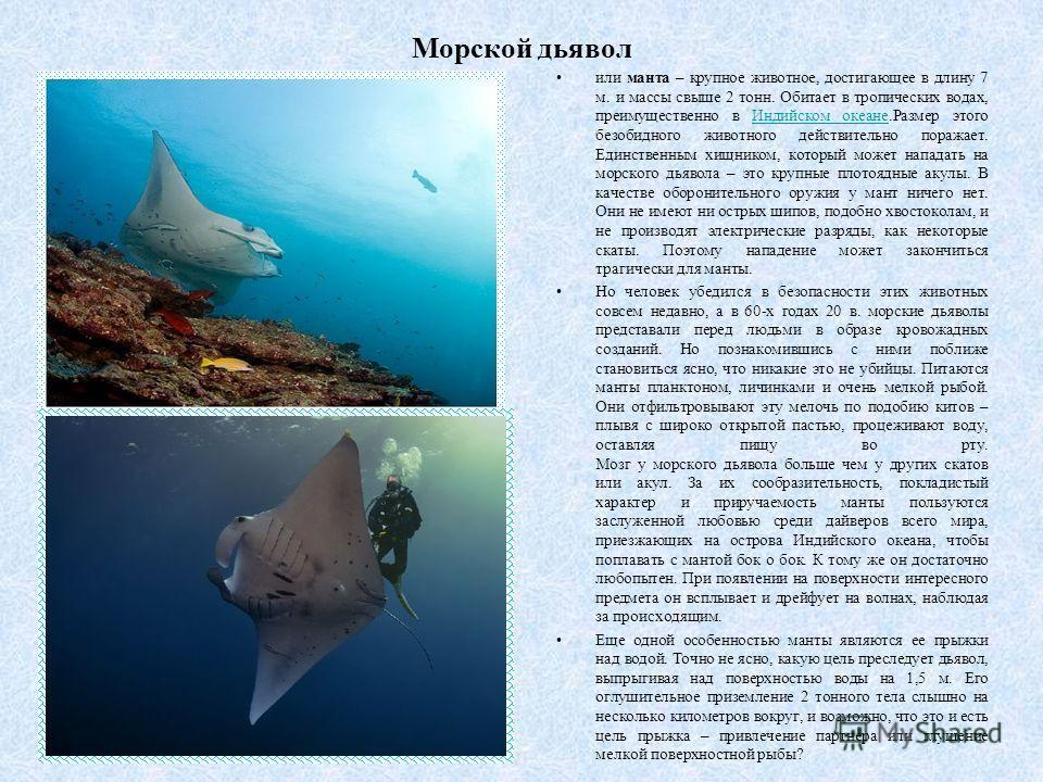 Морской дьявол или манта – крупное животное, достигающее в длину 7 м. и массы свыше 2 тонн. Обитает в тропических водах, преимущественно в Индийском океане.Размер этого безобидного животного действительно поражает. Единственным хищником, который може