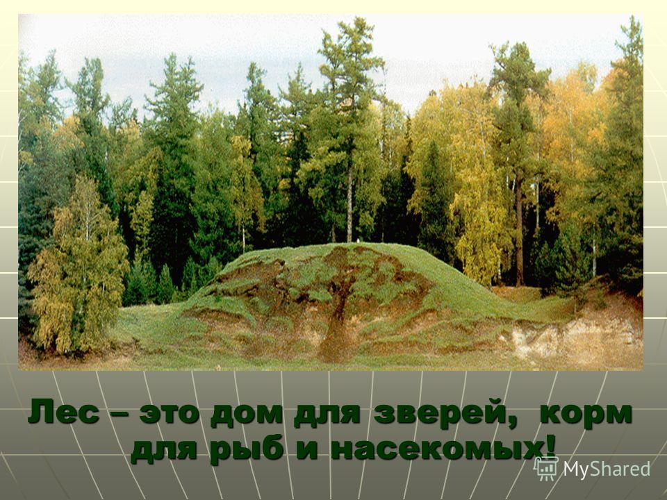 Лес – это дом для зверей, корм для рыб и насекомых!