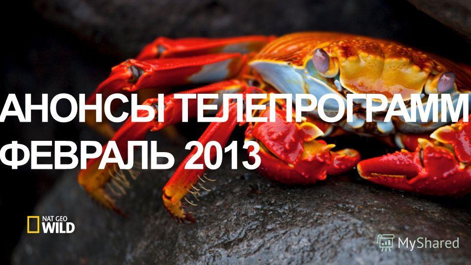 АНОНСЫ ТЕЛЕПРОГРАММ ФЕВРАЛЬ 2013