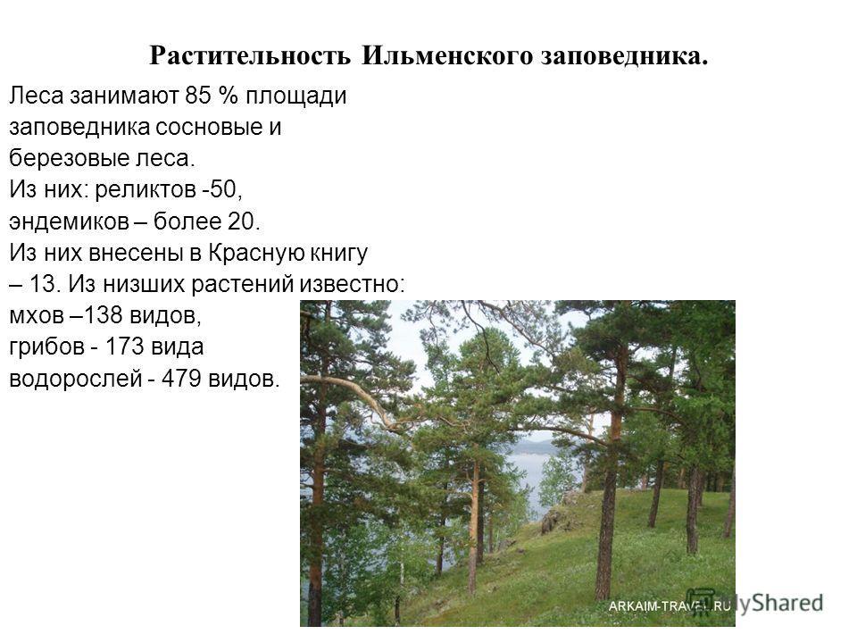 Растительность Ильменского заповедника. Леса занимают 85 % площади заповедника сосновые и березовые леса. Из них: реликтов -50, эндемиков – более 20. Из них внесены в Красную книгу – 13. Из низших растений известно: мхов –138 видов, грибов - 173 вида