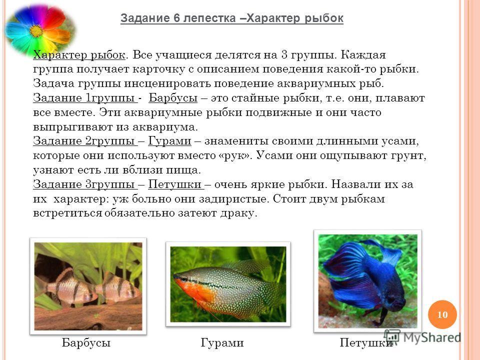 Задание 6 лепестка –Характер рыбок 10 Характер рыбок. Все учащиеся делятся на 3 группы. Каждая группа получает карточку с описанием поведения какой-то рыбки. Задача группы инсценировать поведение аквариумных рыб. Задание 1группы - Барбусы – это стайн