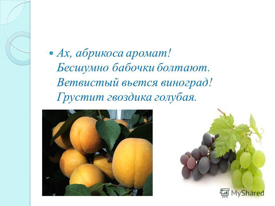 Ах, абрикоса аромат! Бесшумно бабочки болтают. Ветвистый вьется виноград! Грустит гвоздика голубая.