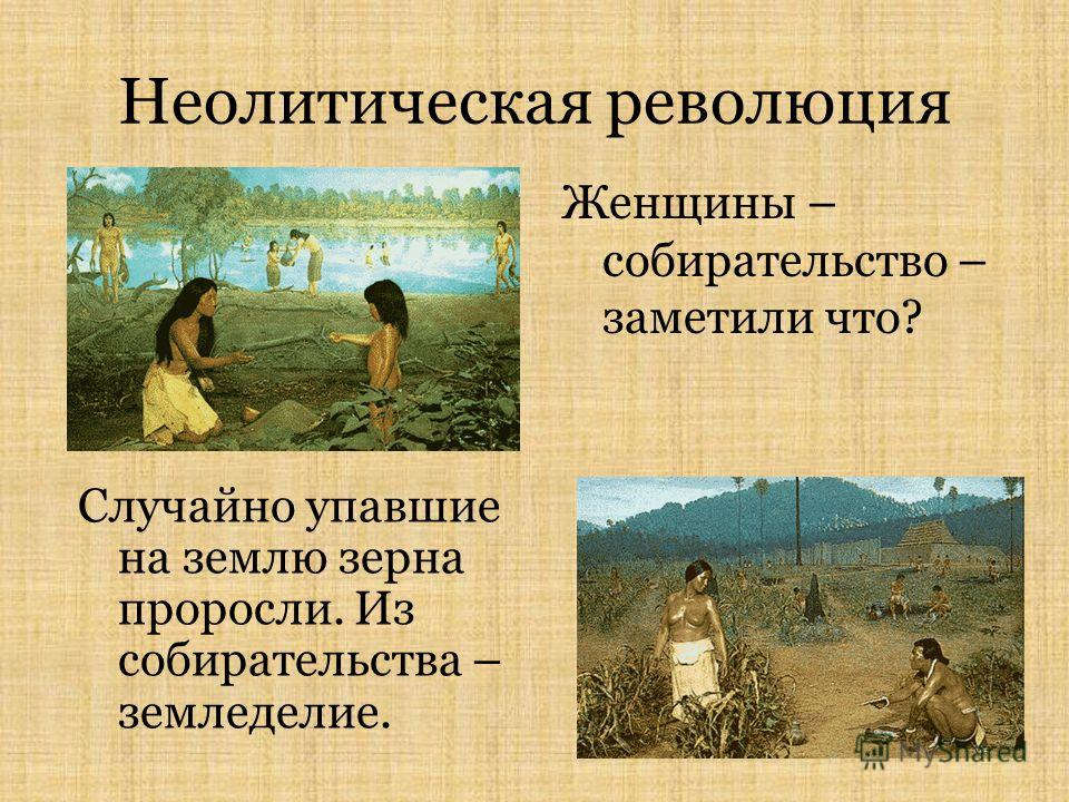 Неолитическая революция Женщины – собирательство – заметили что? Случайно упавшие на землю зерна проросли. Из собирательства – земледелие.