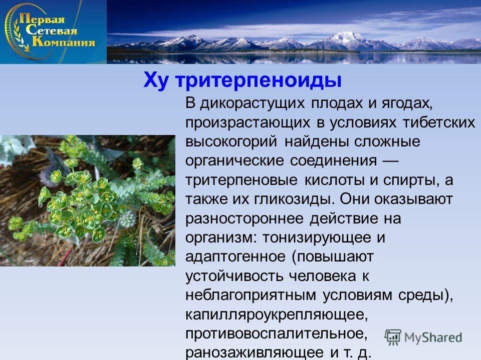 Ху тритерпеноиды В дикорастущих плодах и ягодах, произрастающих в условиях тибетских высокогорий найдены сложные органические соединения тритерпеновые кислоты и спирты, а также их гликозиды. Они оказывают разностороннее действие на организм: тонизиру