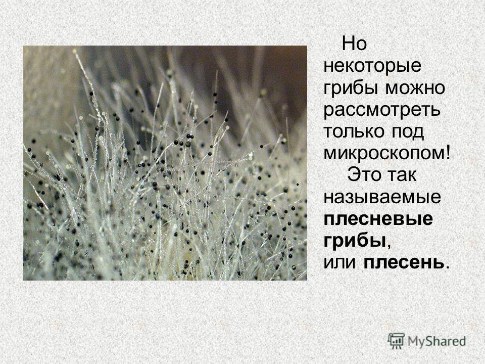 Но некоторые грибы можно рассмотреть только под микроскопом! Это так называемые плесневые грибы, или плесень.