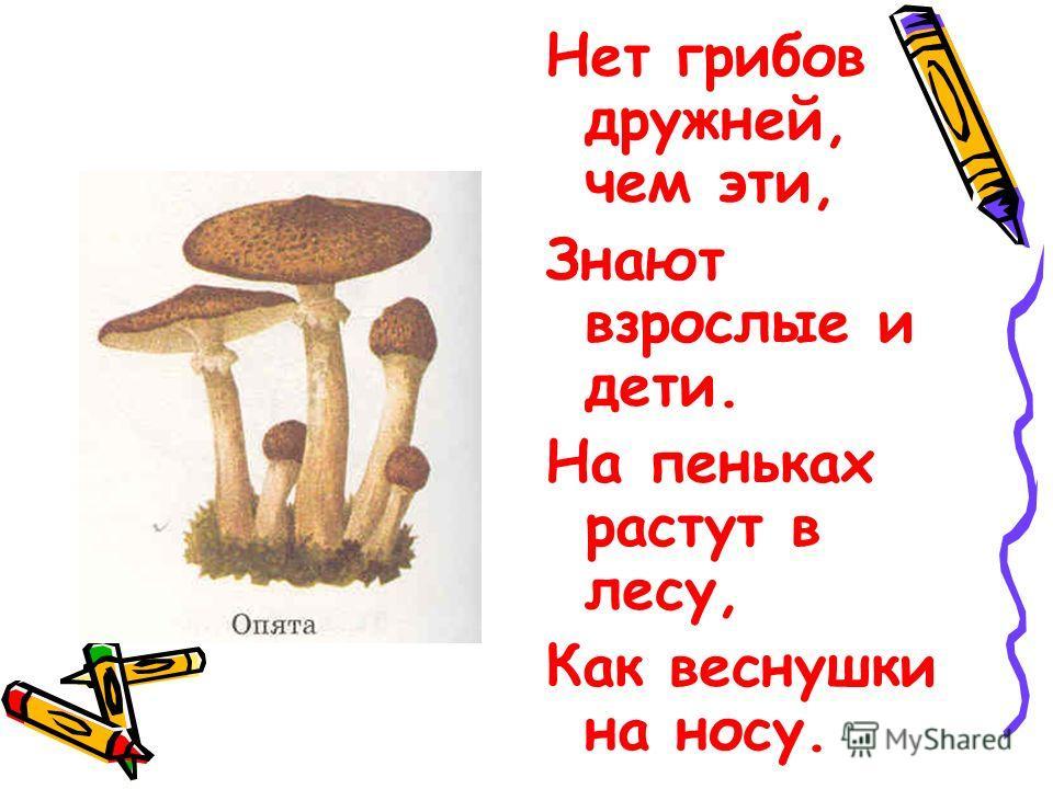 Нет грибов дружней, чем эти, Знают взрослые и дети. На пеньках растут в лесу, Как веснушки на носу.