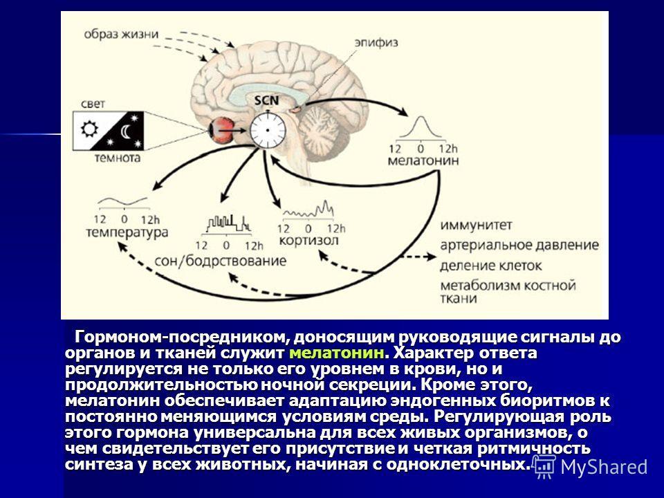 Гормоном-посредником, доносящим руководящие сигналы до органов и тканей служит мелатонин. Характер ответа регулируется не только его уровнем в крови, но и продолжительностью ночной секреции. Кроме этого, мелатонин обеспечивает адаптацию эндогенных би