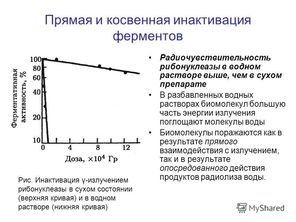 Прямая и косвенная инактивация ферментов Радиочувствительность рибонуклеазы в водном растворе выше, чем в сухом препарате В разбавленных водных растворах биомолекул большую часть энергии излучения поглощают молекулы воды Биомолекулы поражаются как в