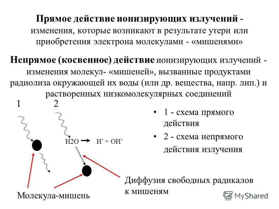 Прямое действие ионизирующих излучений - изменения, которые возникают в результате утери или приобретения электрона молекулами - «мишенями» 1 - схема прямого действия 2 - схема непрямого действия излучения Н2О Н + OH 12 Диффузия свободных радикалов к