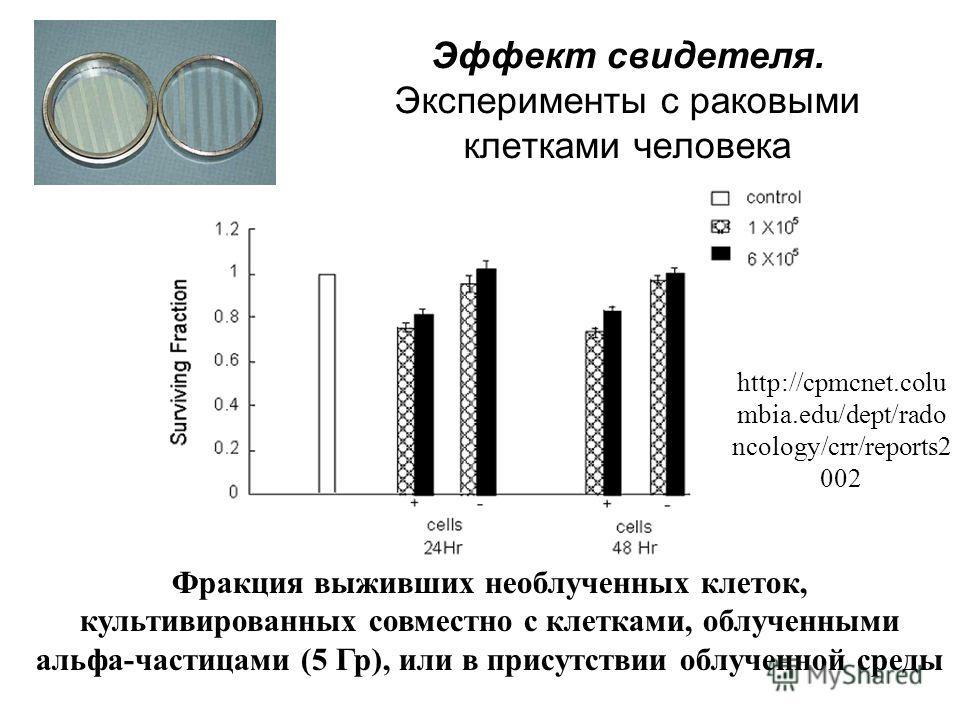 Эффект свидетеля. Эксперименты с раковыми клетками человека Фракция выживших необлученных клеток, культивированных совместно с клетками, облученными альфа-частицами (5 Гр), или в присутствии облученной среды http://cpmcnet.colu mbia.edu/dept/rado nco