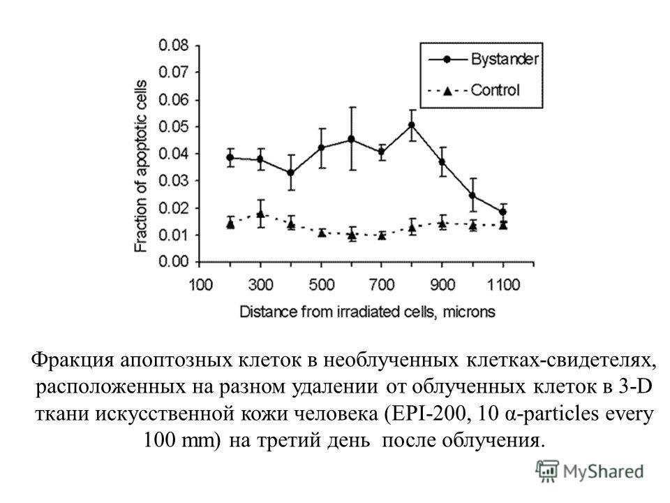 Фракция апоптозных клеток в необлученных клетках-свидетелях, расположенных на разном удалении от облученных клеток в 3-D ткани искусственной кожи человека (EPI-200, 10 α-particles every 100 mm) на третий день после облучения.