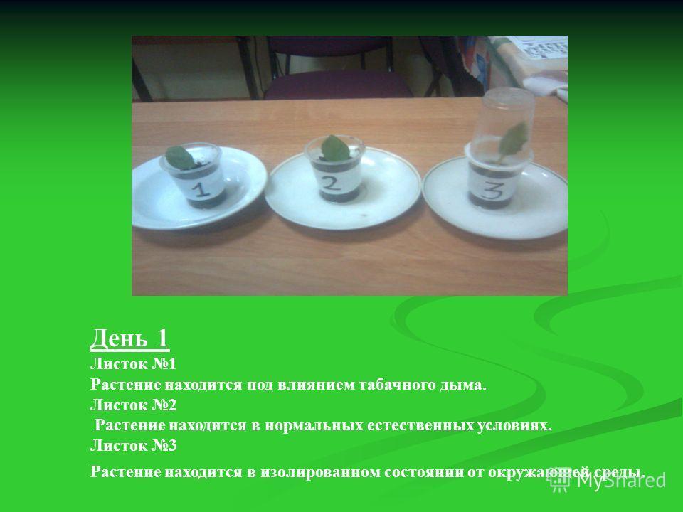 День 1 Листок 1 Растение находится под влиянием табачного дыма. Листок 2 Растение находится в нормальных естественных условиях. Листок 3 Растение находится в изолированном состоянии от окружающей среды.