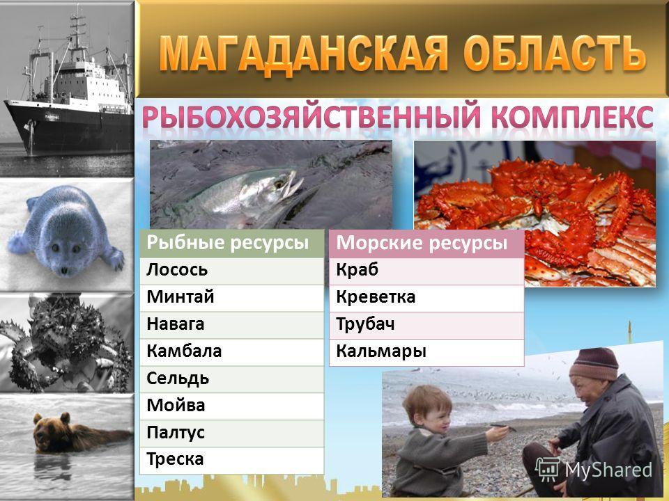 Рыбные ресурсы Лосось Минтай Навага Камбала Сельдь Мойва Палтус Треска Морские ресурсы Краб Креветка Трубач Кальмары