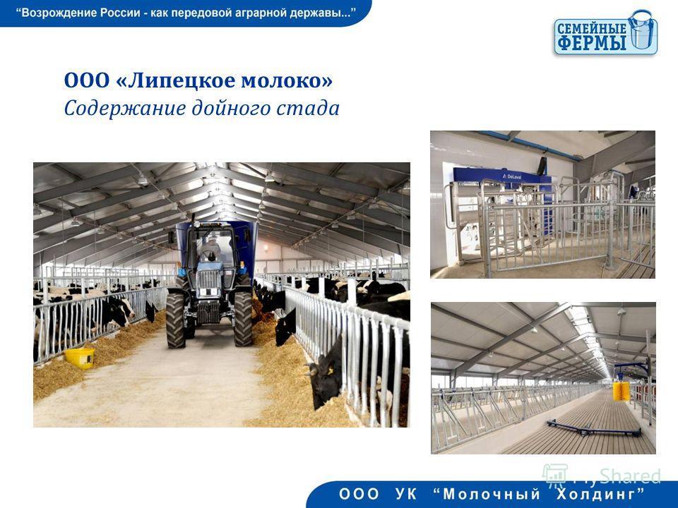 ООО «Липецкое молоко» Содержание дойного стада