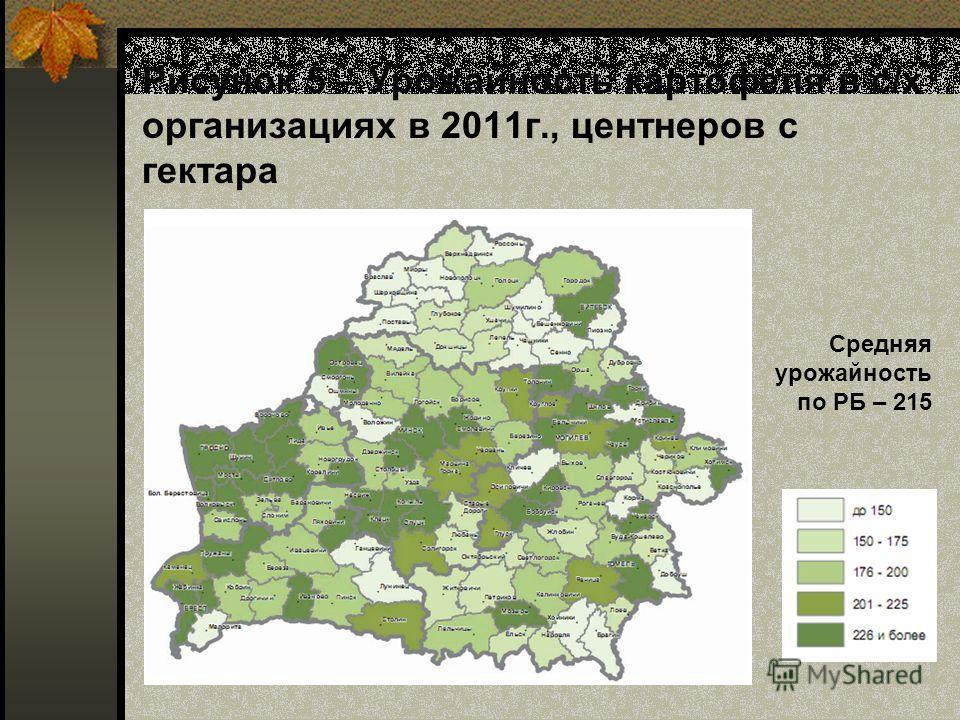 Рисунок 5 – Урожайность картофеля в с/х организациях в 2011г., центнеров с гектара Средняя урожайность по РБ – 215