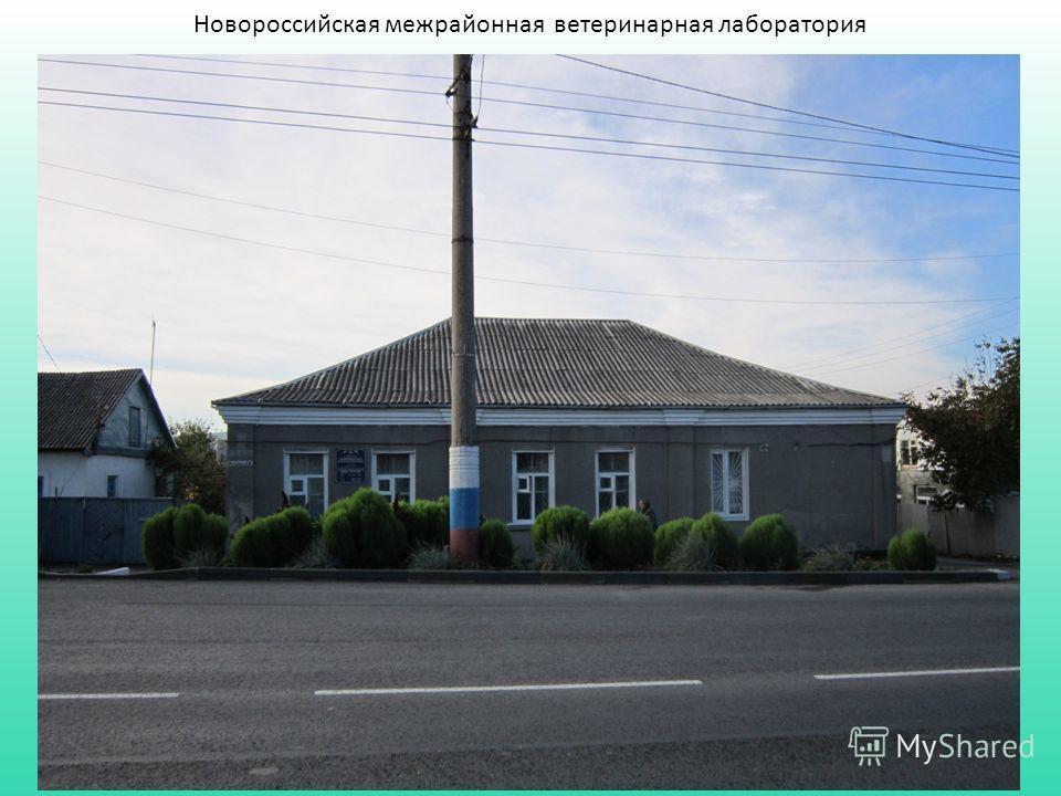 Новороссийская межрайонная ветеринарная лаборатория