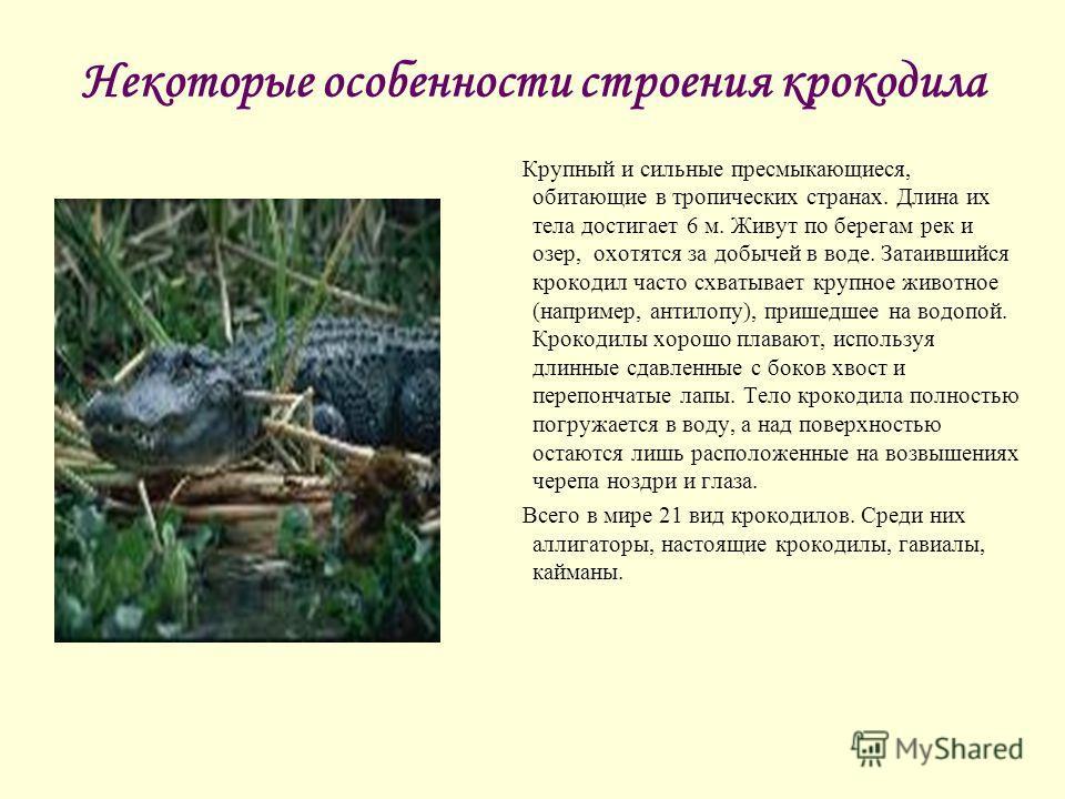 Некоторые особенности строения крокодила Крупный и сильные пресмыкающиеся, обитающие в тропических странах. Длина их тела достигает 6 м. Живут по берегам рек и озер, охотятся за добычей в воде. Затаившийся крокодил часто схватывает крупное животное (