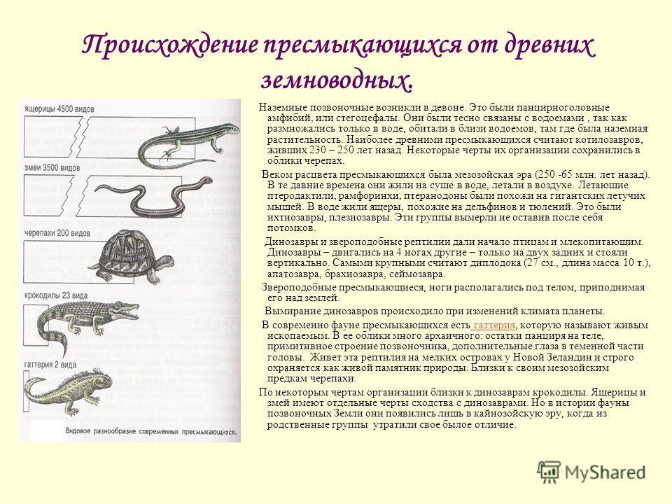 Происхождение пресмыкающихся от древних земноводных. Наземные позвоночные возникли в девоне. Это были панцирноголовные амфибий, или стегоцефалы. Они были тесно связаны с водоемами, так как размножались только в воде, обитали в близи водоемов, там где