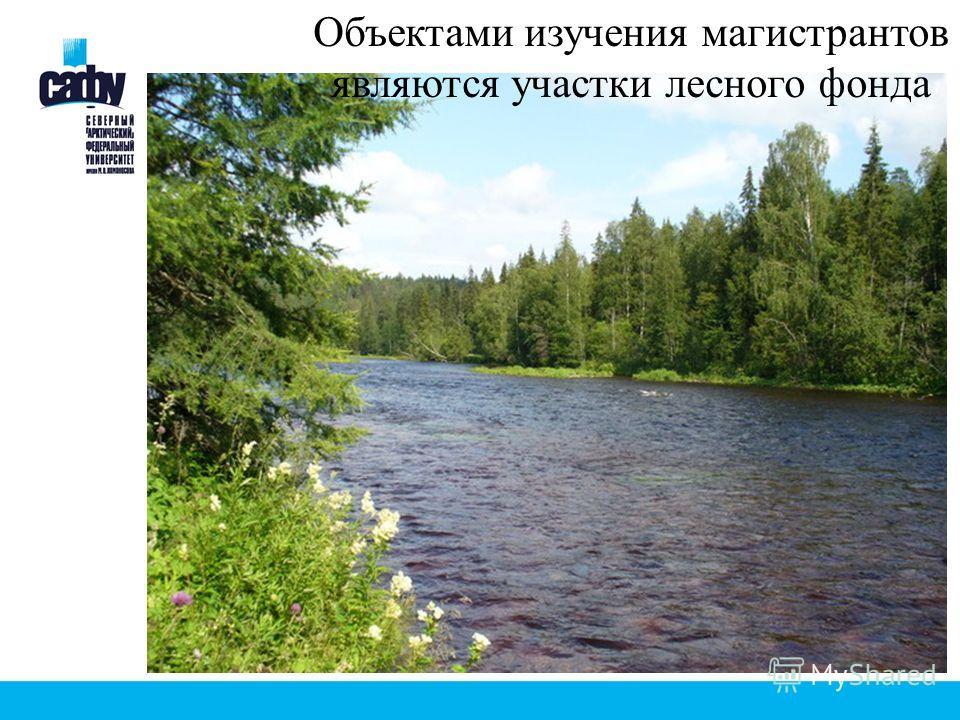 Объектами изучения магистрантов являются участки лесного фонда