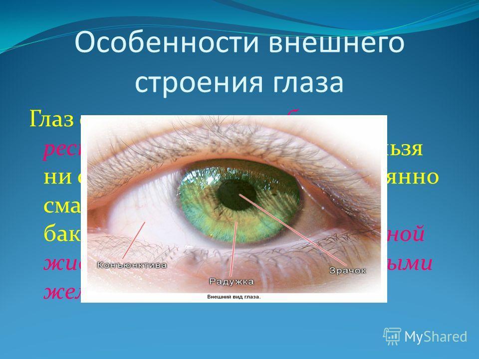 Особенности внешнего строения глаза Глаз снаружи защищен бровями, ресницами, веками. А также нельзя ни сказать о том, что глаз постоянно смачивается и защищается от бактерий и инородных тел слезной жидкостью, выделяемой слезными железами.