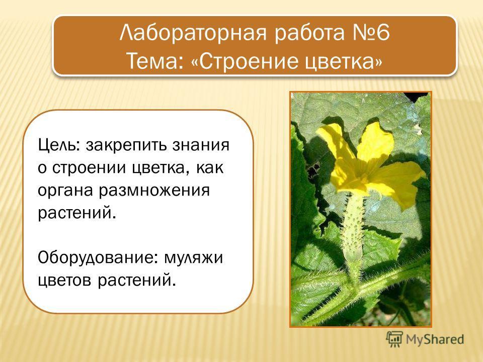 Цель: закрепить знания о строении цветка, как органа размножения растений. Оборудование: муляжи цветов растений. Лабораторная работа 6 Тема: «Строение цветка» Лабораторная работа 6 Тема: «Строение цветка»