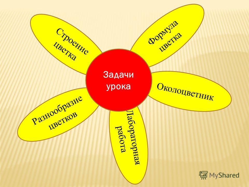 Лабораторная работа Формула цветка Разнообразие цветков Околоцветник Строение цветка Задачи урока