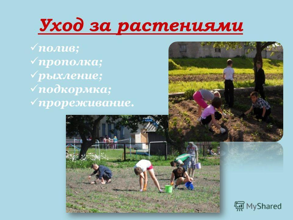 Уход за растениями полив; прополка; рыхление; подкормка; прореживание.
