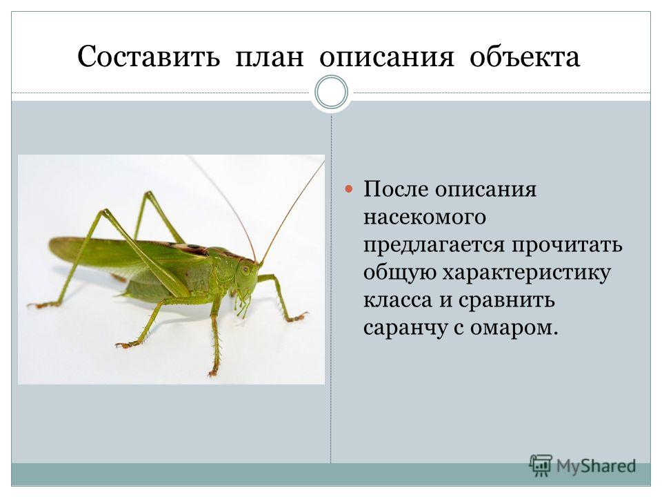 Составить план описания объекта После описания насекомого предлагается прочитать общую характеристику класса и сравнить саранчу с омаром.