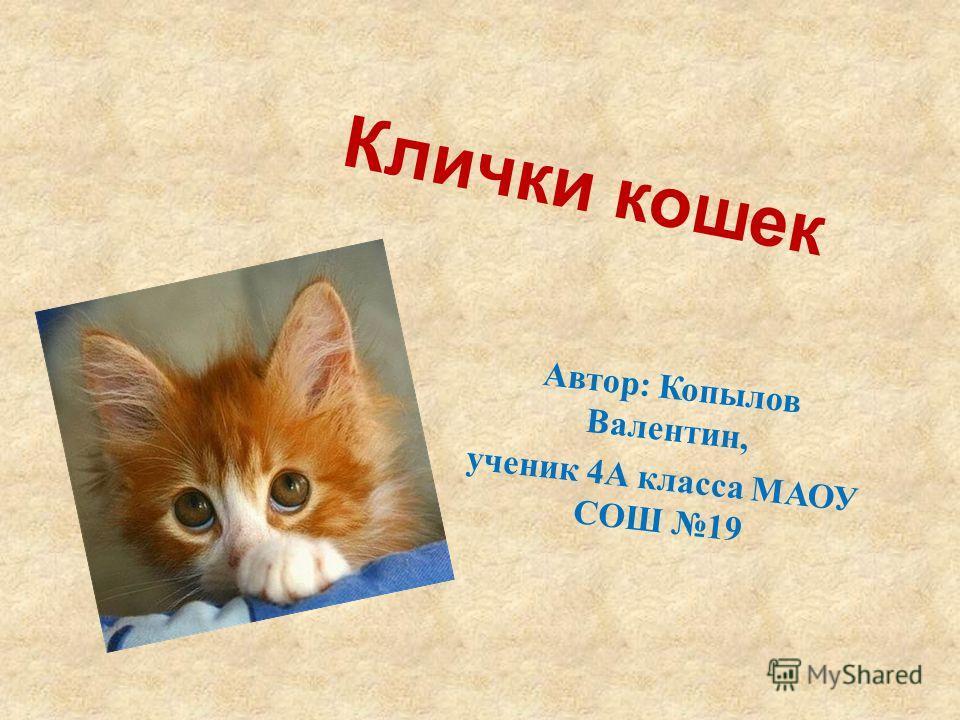 Клички кошек Автор: Копылов Валентин, ученик 4А класса МАОУ СОШ 19