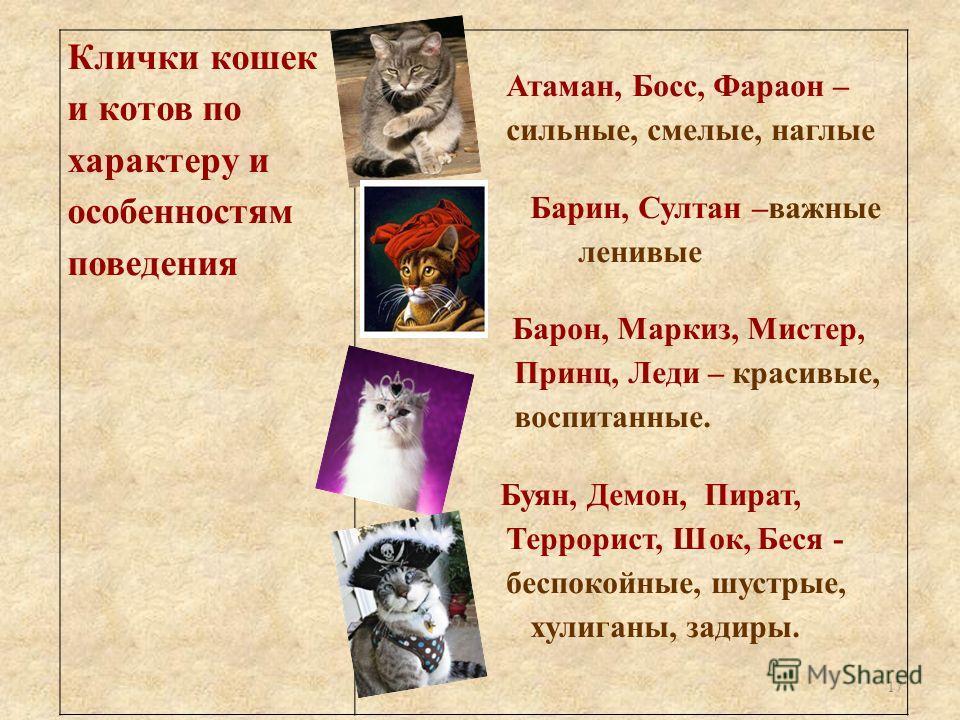Клички кошек и котов по характеру и особенностям поведения Атаман, Босс, Фараон – сильные, смелые, наглые Барин, Султан –важные ленивые Барон, Маркиз, Мистер, Принц, Леди – красивые, воспитанные. Буян, Демон, Пират, Террорист, Шок, Беся - беспокойные