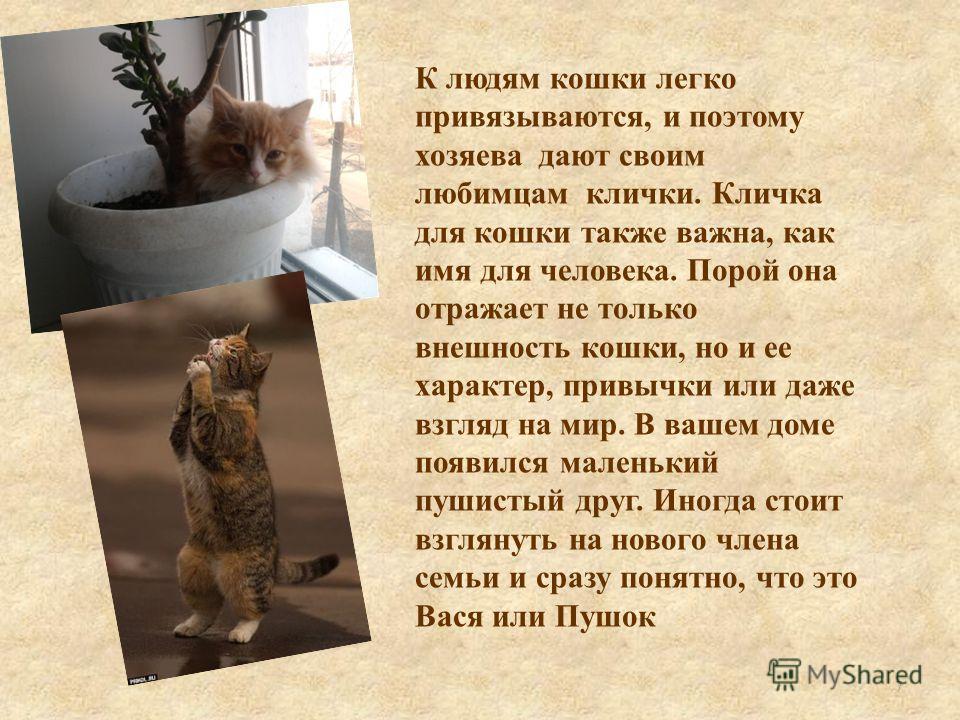 К людям кошки легко привязываются, и поэтому хозяева дают своим любимцам клички. Кличка для кошки также важна, как имя для человека. Порой она отражает не только внешность кошки, но и ее характер, привычки или даже взгляд на мир. В вашем доме появилс