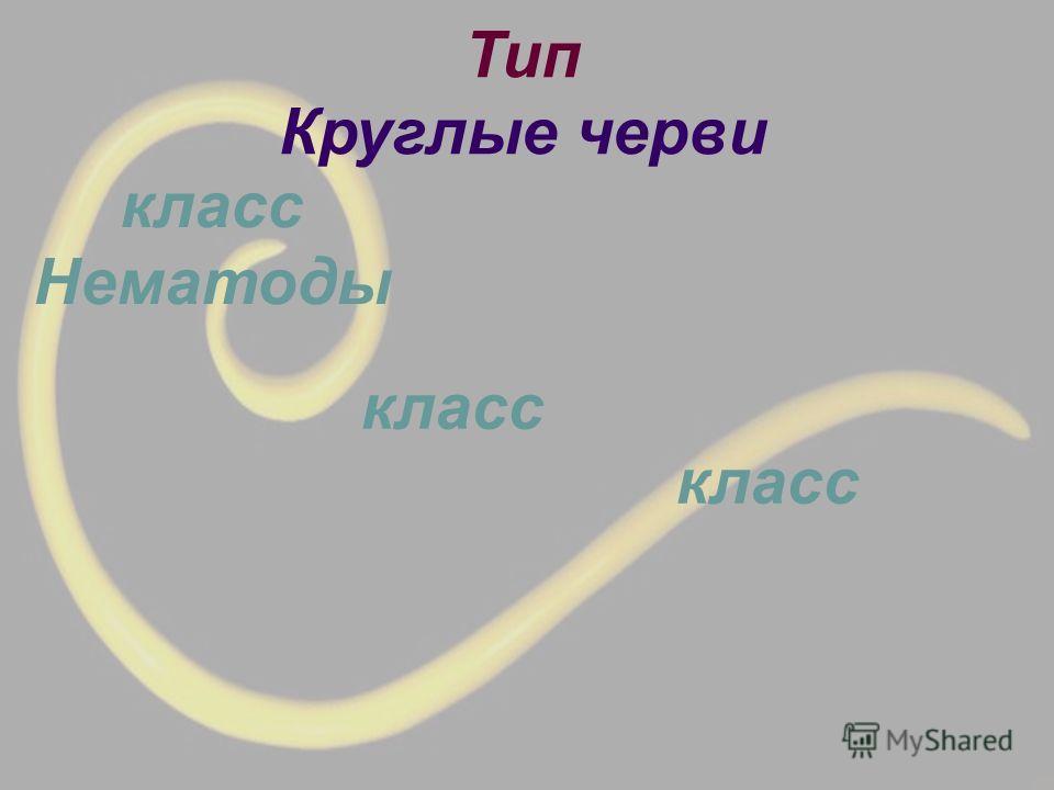Тип Круглые черви класс класс Нематоды класс