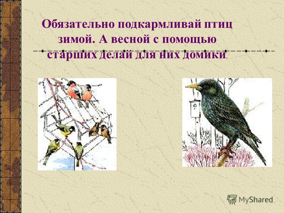 Обязательно подкармливай птиц зимой. А весной с помощью старших делай для них домики.