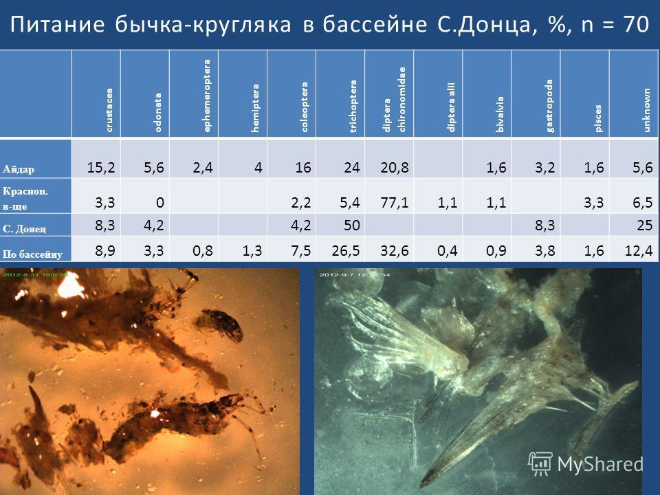 Питание бычка-кругляка в бассейне С.Донца, %, n = 70 crustacea odonata ephemeroptera hemiptera coleoptera trichoptera diptera chironomidae diptera al іі bivalvia gastropoda pisces unknown Айдар 15,25,62,44162420,8 1,63,21,65,6 Красноп. в-ще 3,30 2,25