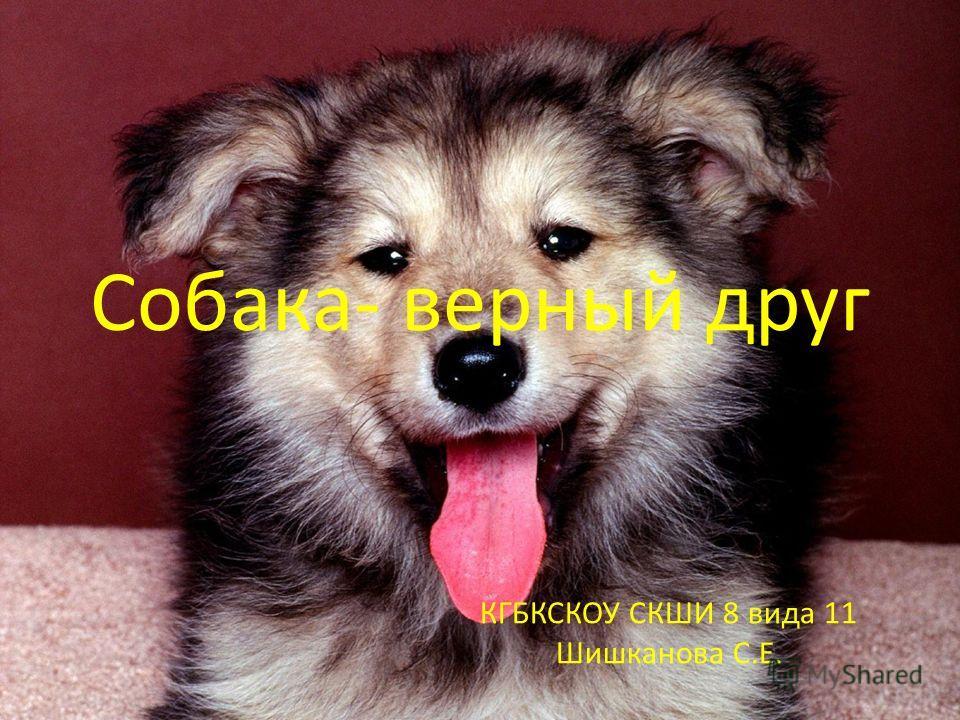 Собака- верный друг КГБКСКОУ СКШИ 8 вида 11 Шишканова С.Е.