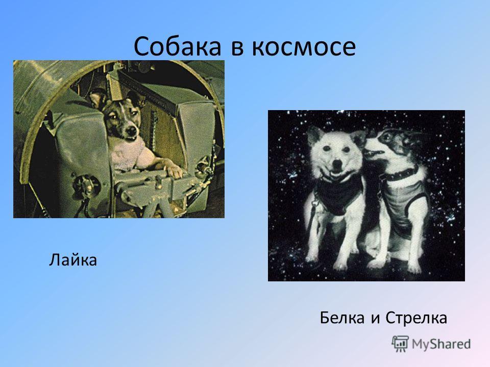 Собака в космосе Лайка Белка и Cтрелка