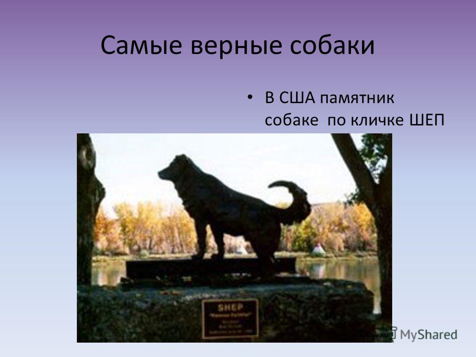 Самые верные собаки В США памятник собаке по кличке ШЕП