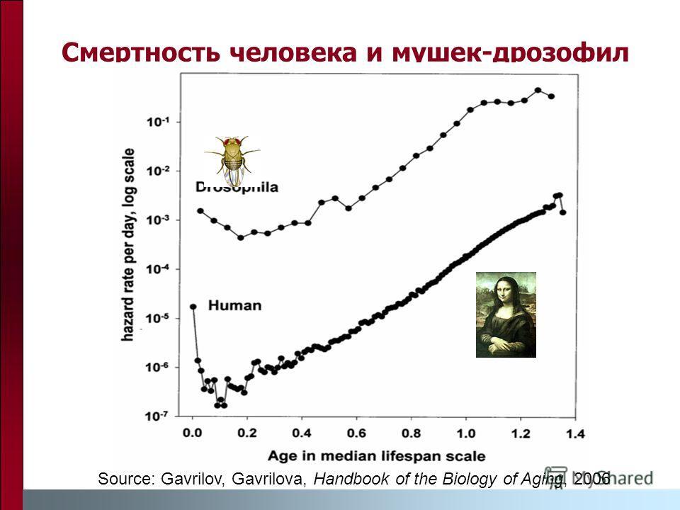 Смертность человека и мушек-дрозофил Source: Gavrilov, Gavrilova, Handbook of the Biology of Aging, 2006