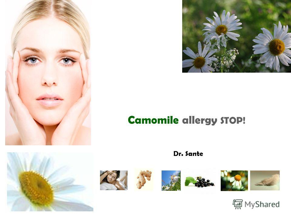 Camomile allergy STOP! Dr. Sante