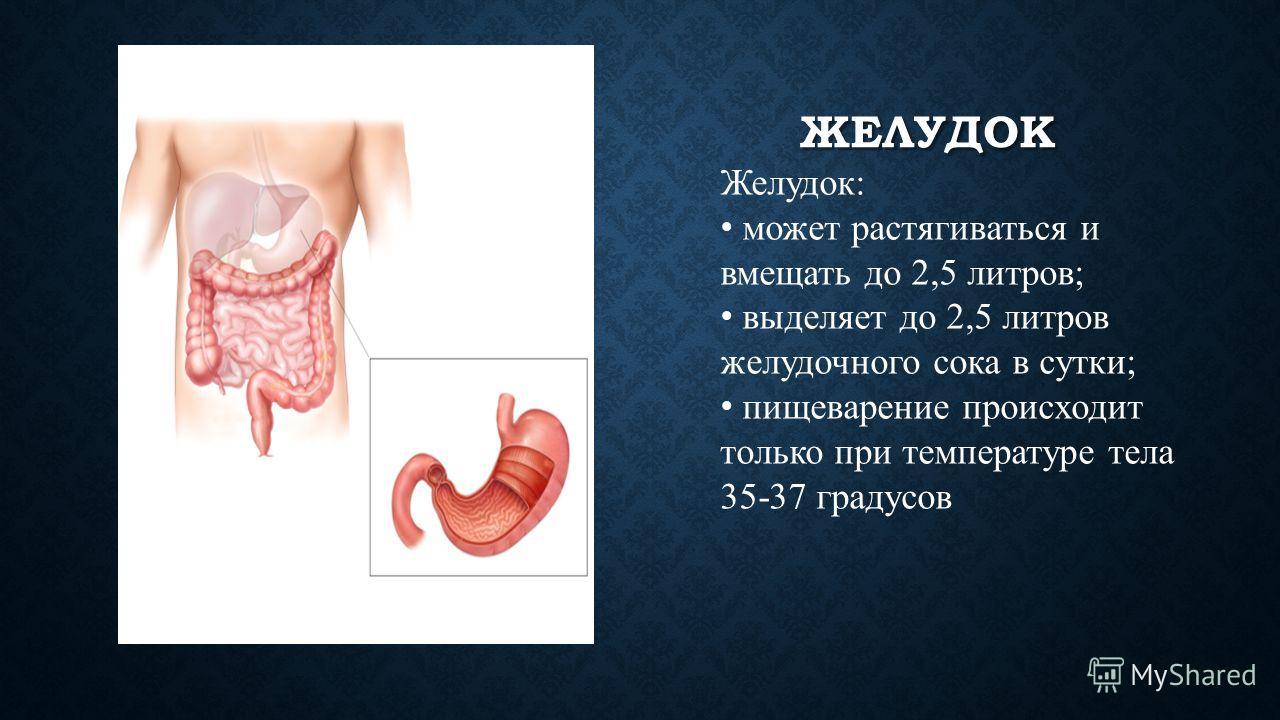 ПИЩЕВОД Пищевод - мышечная трубка, отвечающая за продвижение пищи благодаря волнообразным сокращениям стенок