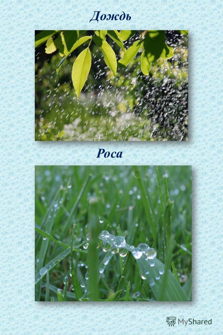 Дождь Роса