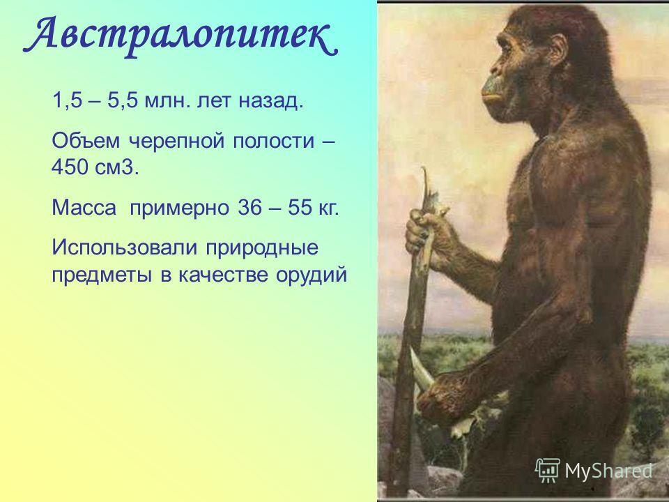 Австралопитек 1,5 – 5,5 млн. лет назад. Объем черепной полости – 450 см3. Масса примерно 36 – 55 кг. Использовали природные предметы в качестве орудий