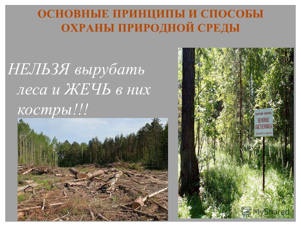 ОСНОВНЫЕ ПРИНЦИПЫ И СПОСОБЫ ОХРАНЫ ПРИРОДНОЙ СРЕДЫ НЕЛЬЗЯ вырубать леса и ЖЕЧЬ в них костры!!!