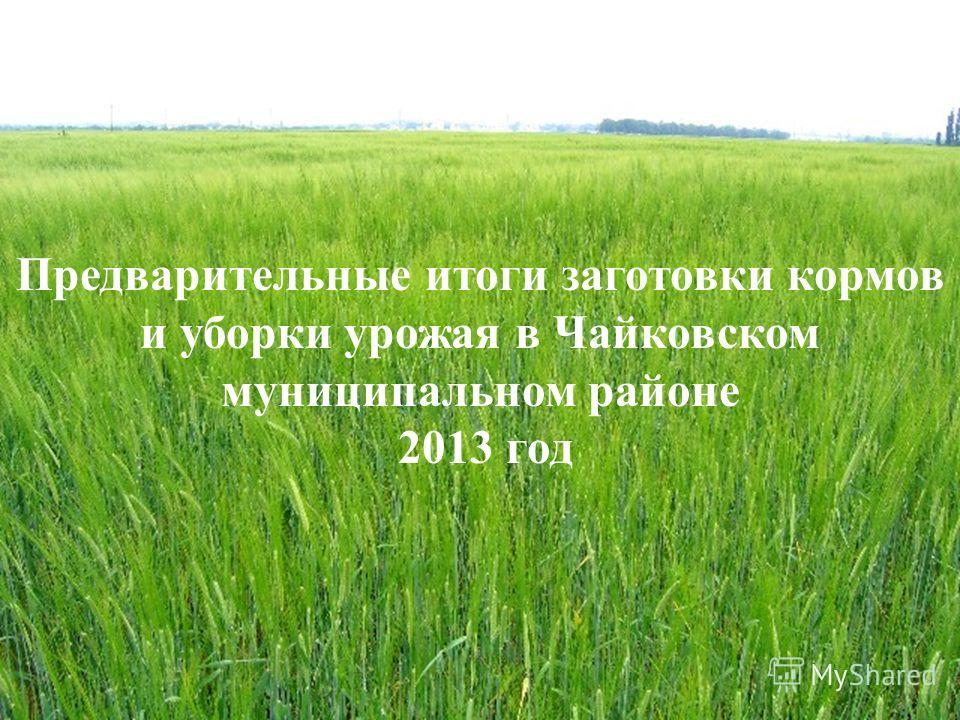 Предварительные итоги заготовки кормов и уборки урожая в Чайковском муниципальном районе 2013 год